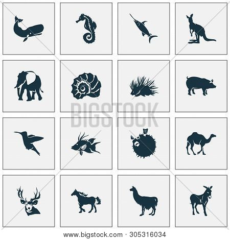 poster of Fauna Icons Set With Hogfish, Porcupine, Swordfish And Other Joey Elements. Isolated  Illustration F