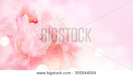 poster of Beautiful pink peony bouquet art background. Blooming pastel peony or roses border flowers card desi
