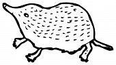 pygmy shrew illustration (raster version)