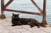 Stray Black Cat Lying On A Stone Footpath In Front Of The Sea On The Limassol Seafront poster