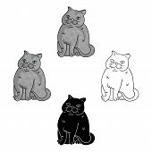 Exotic Shorthair Icon In Cartoon, Black Style Isolated On White Background. Cat Breeds Symbol Stock  poster