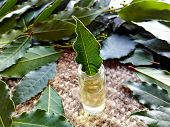 Bay Leaf Macro In Glass Bottle With Bay Leaf Essential Oil On Burlap Background. Organic Fresh Green poster