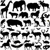 Big Zoo