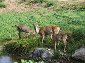 Deer At The Creek
