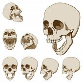 Set of seven drawings of human skull. Vector illustration