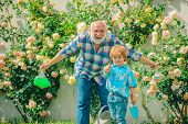 Grandfather And Grandchild Enjoying In The Garden With Roses Flowers. Grandfather Talking To Grandso poster