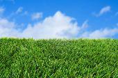 Closeup von Gras über den blauen Himmel