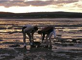 stock photo of clam digging  - father and girl digging clams at sunset in  glooscap - JPG
