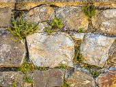 Old Wall With Typical Wall Flora With Wall-rue (asplenium Ruta-muraria),  Maidenhair Spleenwort (asp poster