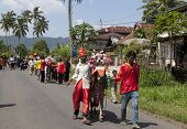 SUMATERA, INDONESIA - FEB 11: Villagers in traditional costumes take the bulls for a procession through the village to take part in a bull race called pacu jawi on Feb 11, 2012 in Sumatera, Indonesia.