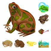 Isolated Object Of Frog And Anuran Icon. Collection Of Frog And Animal Stock Vector Illustration. poster