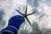 Hand Holding Starfish Underwater. Starfish In Hand Underwater poster