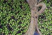 Baskets of olives