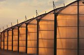 Large scale industrial greenhouse lit by sunet