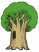 cartoon illustration of oak
