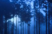 spooky blue toned forest background