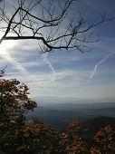 Autumn Top Tree & Sun & Blue Sky poster