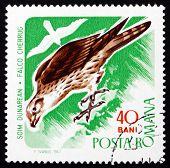 Postage stamp Romania 1967 Saker Falcon, Bird of Prey