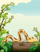 Illustration of a snake on tree in green nature