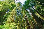 Nachschlagen in Wald-Riesen