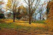 Golden Autumn Day in Cemetery