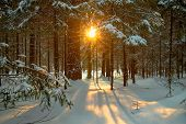 stock photo of winter season  - beautiful winter landscape with the forest and the sun - JPG