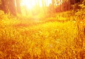 Dry golden grass in autumnal park, fall nature, sunny day, bright sunset light, beautiful landscape, autumn season concept