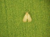 Stereoscopic Shot Of A Whitefly