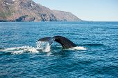 stock photo of whale-tail  - Tail fin of the mighty humpback whale  - JPG