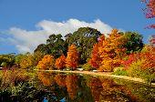Autumncommpark