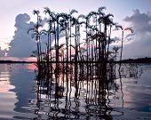 Amazonian Lake Cuyabeno. Ecuador