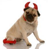 Pug Dressed As A Devil