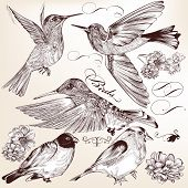 Collection Of Vector Hand Drawn Detailed  Birds For Design