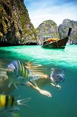 Underwater picture with fish and woman snorkeling  in Maya bay, Ko Phi Phi Le, Thailand