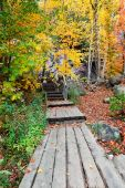 Boardwalk In The Woods On A Colorful Fall Day