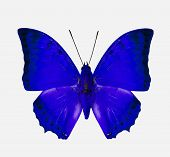 Beautiful Blue Butterfly Isolated On White Background