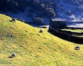 Farmland, Keld, Yorkshire Dales.