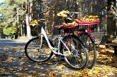 Two Bicycles In Autumn Park With Yellow Tree Leaves