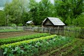 pic of log fence  - Rural vegetable Garden with gourd bird houses - JPG