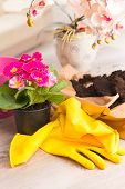Planting colorfull flower in a flowerpot at home. Soil, yellow gloves, flowerpot and flowers ready t