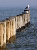 stock photo of geologie  - Row of Groynes as Coastal Protection in Mecklenburg - JPG