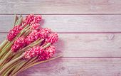 Red Hyacinths On A Table