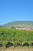 Sankt Martin,German Wine Route,Palatinate
