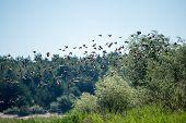 Birds On The Beach Flying
