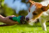 dog drinks water, spray