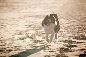 Dog Running on Beach Silhouette