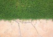 Pavement And Grass Green.