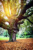 Autumn Landscape With Big Oak Tree