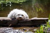 Dog In Distress