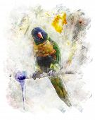 Watercolor Digital Painting Of Parrot (Rainbow Lorikeet)